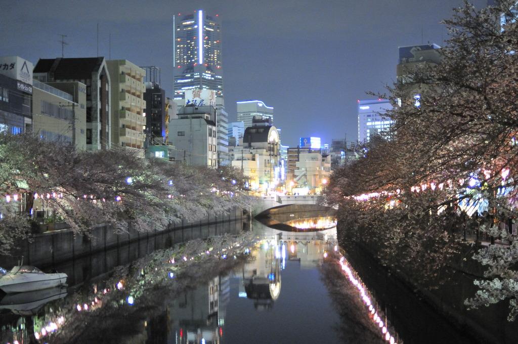 ヨコハマ桜模様