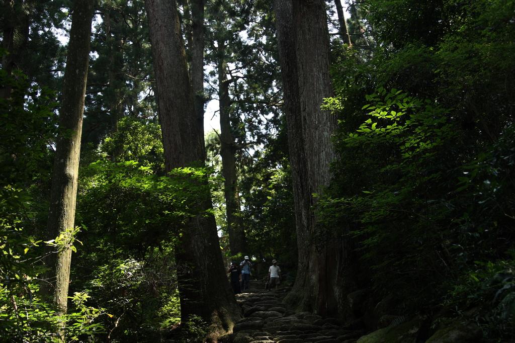 二本の木の間