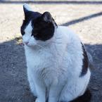 PENTAX PENTAX K-xで撮影した動物(日陰って気持ちいいよね。真冬だけど)の写真(画像)