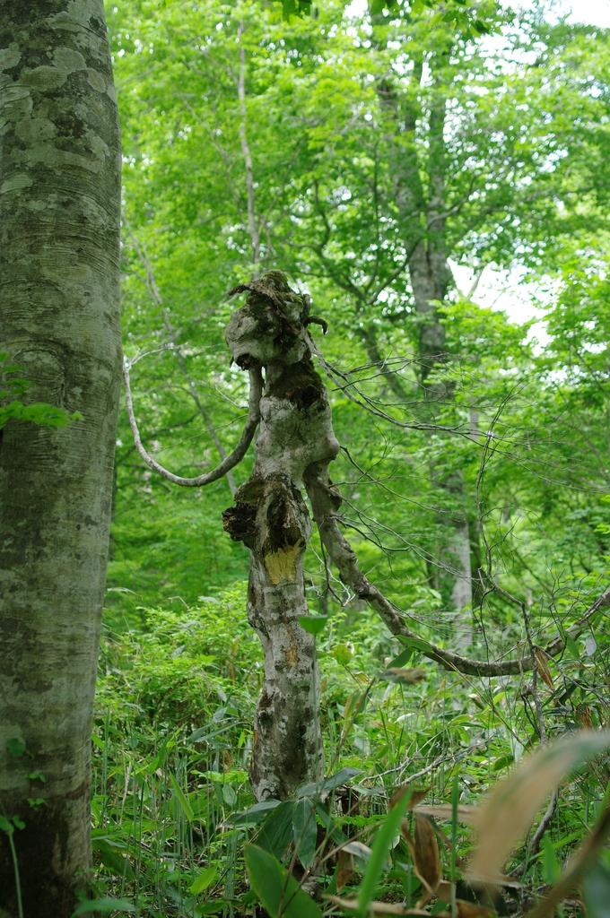 エイリアンに見える?変な木