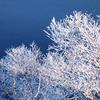 摩周湖の樹氷
