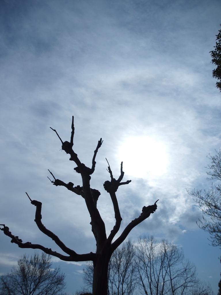 青白い太陽