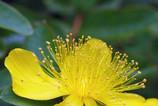 花の中の賑わい