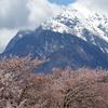 甲斐駒と桜