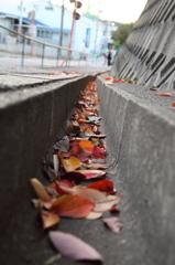 葉のコップ