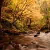 川の目線で紅葉楽しむ