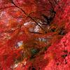 秋のスター