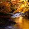 黄金色の川面