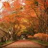 秋深まる山門