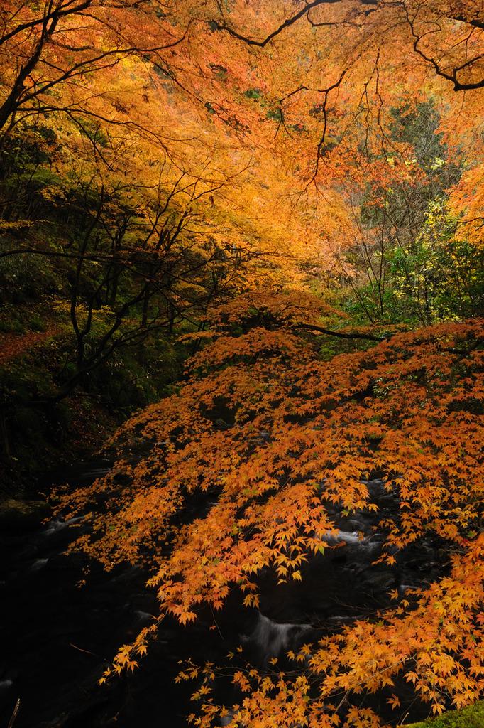 川面上の橙1