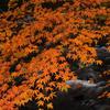 川面上の橙2