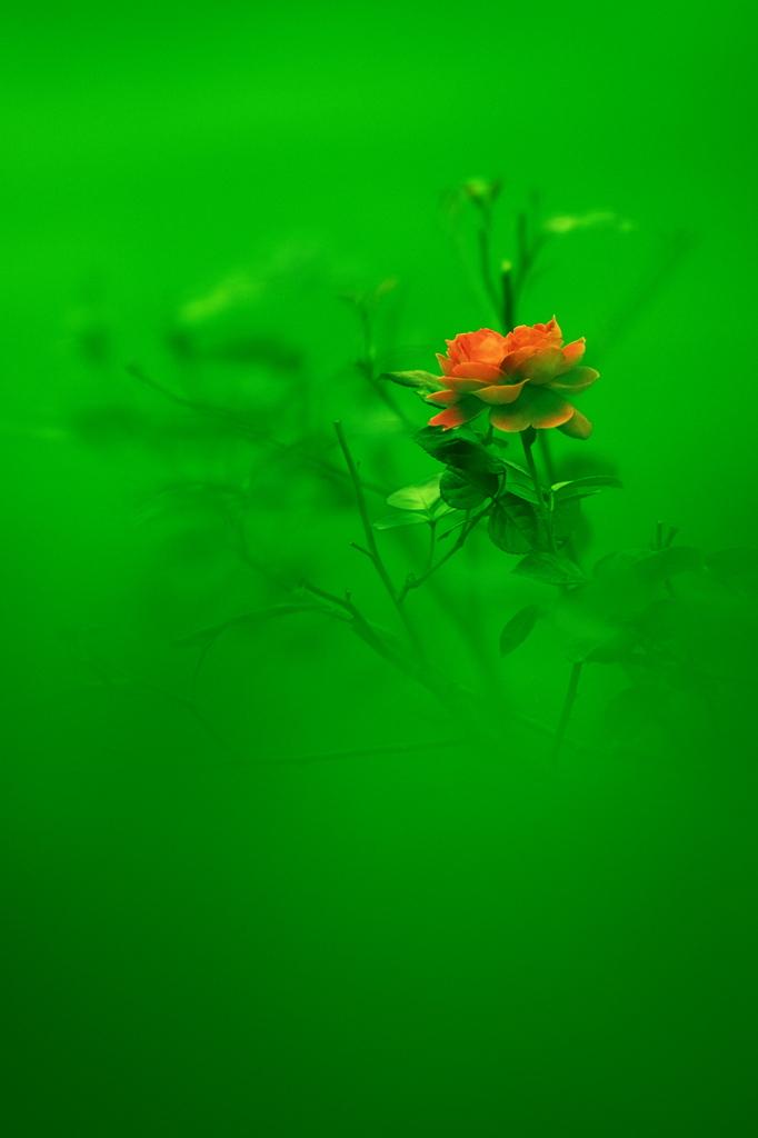 碧の海に咲く