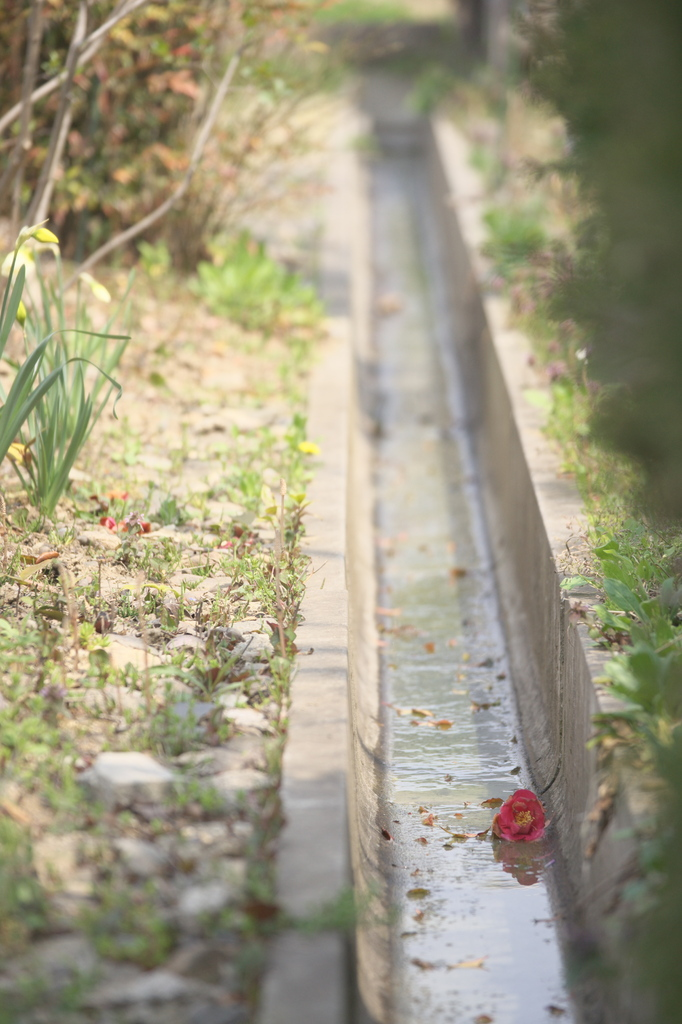 花の散り際