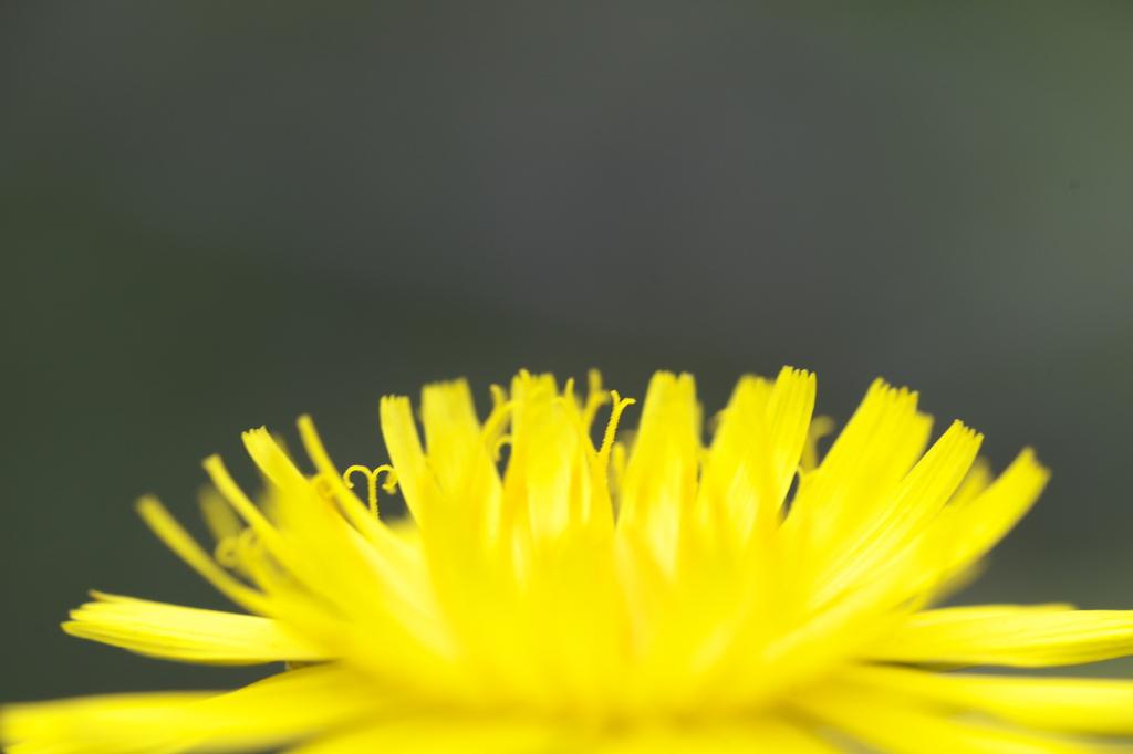 黄色いステージ