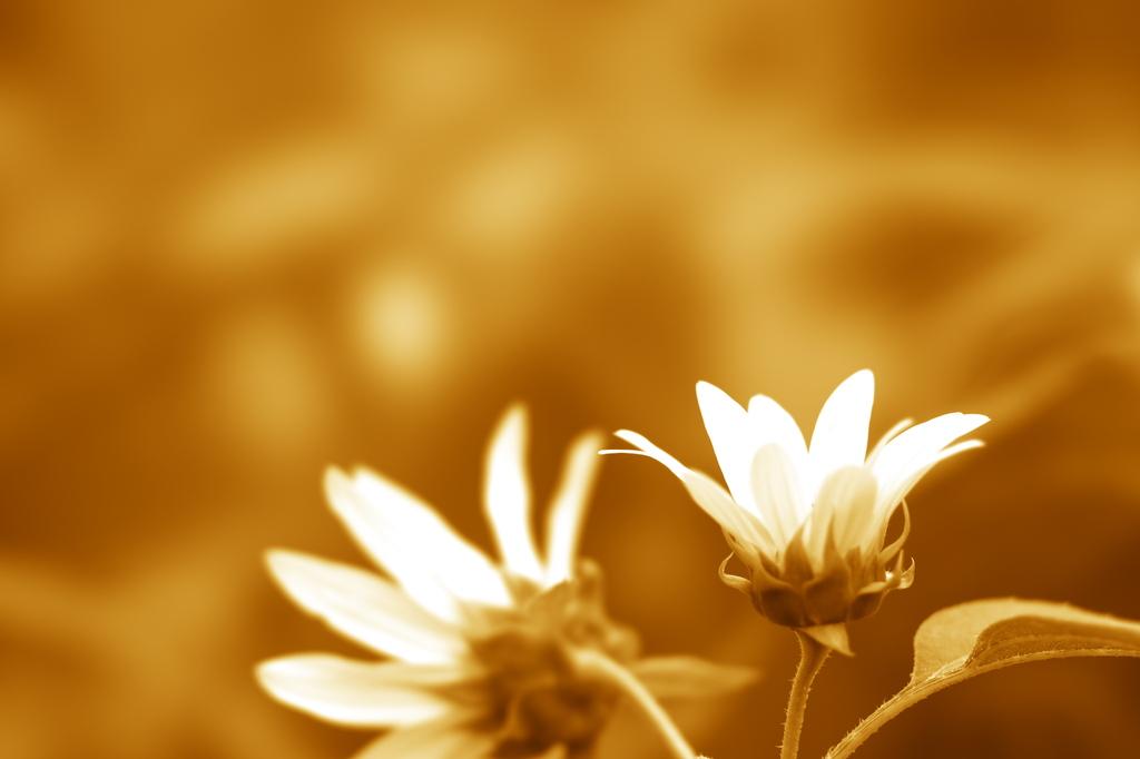 あの日の花の色