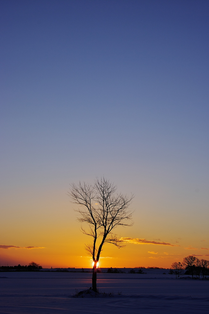 新しい夜明け