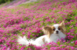 お花畑につつまれて。