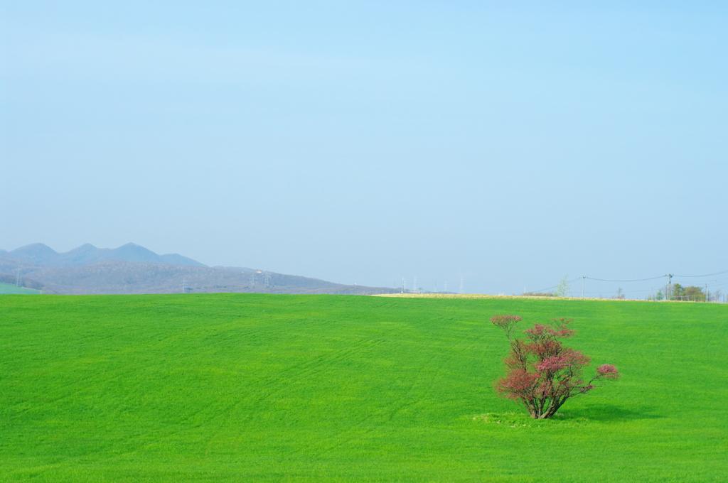 春風が吹く丘