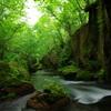 新緑の世界