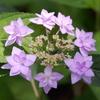 花のティアラ