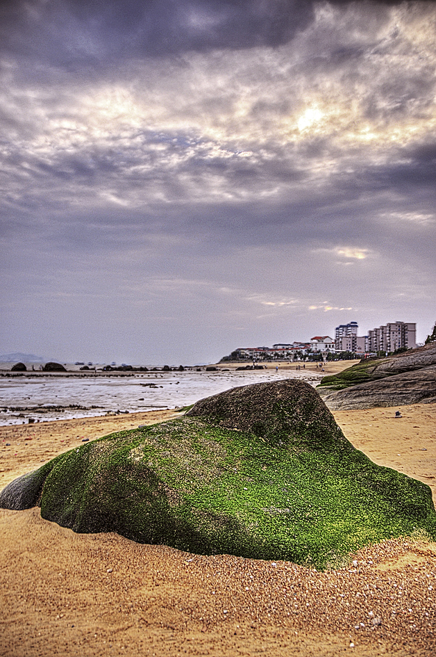 干潮時の岩苔