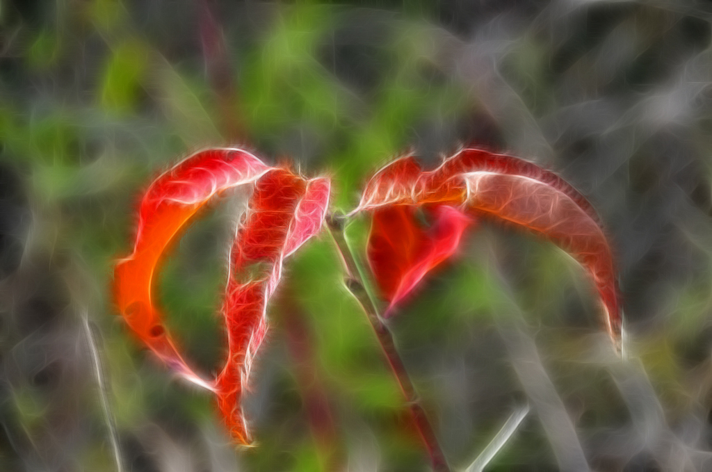 red leaf 3