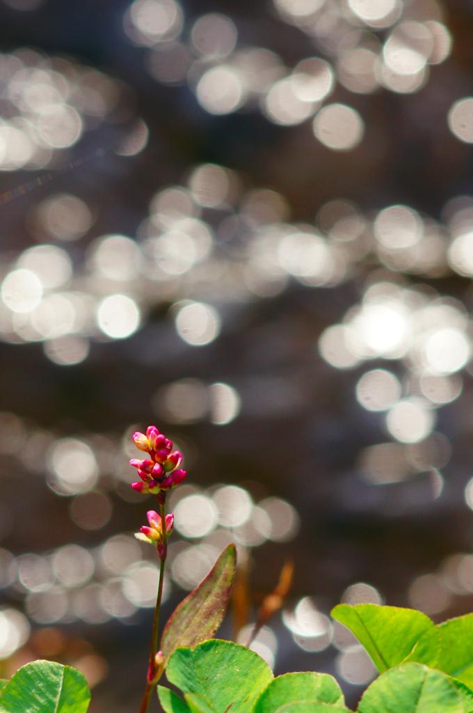 冬の光 煌めく