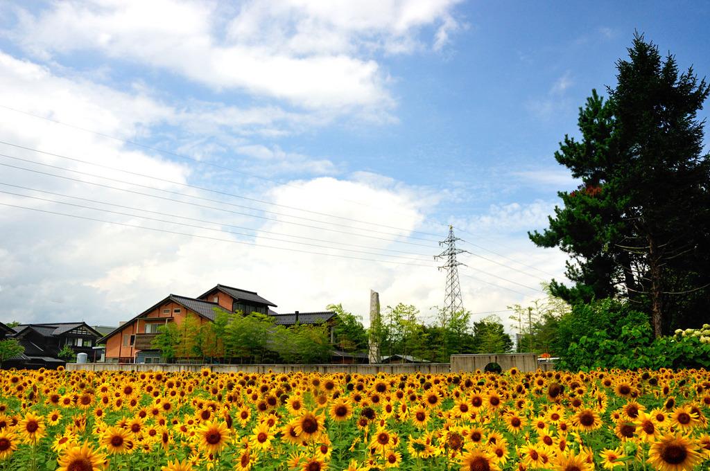 ようやく夏!?