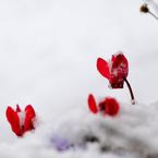 NIKON NIKON D700で撮影した植物(寒さを耐えて・・・)の写真(画像)