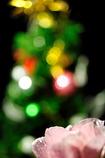 ☆★クリスマス★☆ イブイブ♪