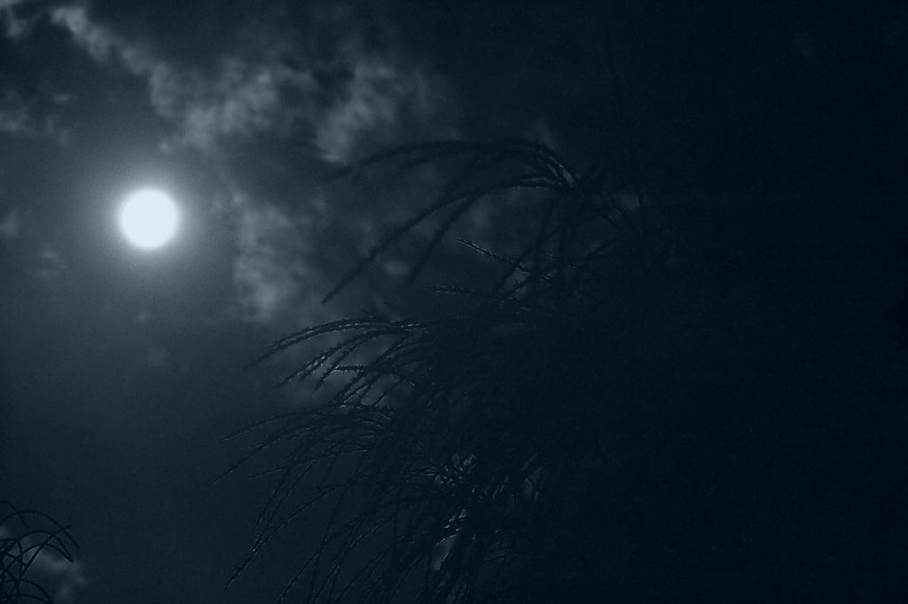 すすきと中秋の名月