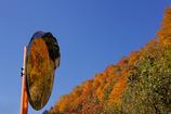 ミラーの中の秋