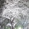 大雪警報発令! 雪花満開!