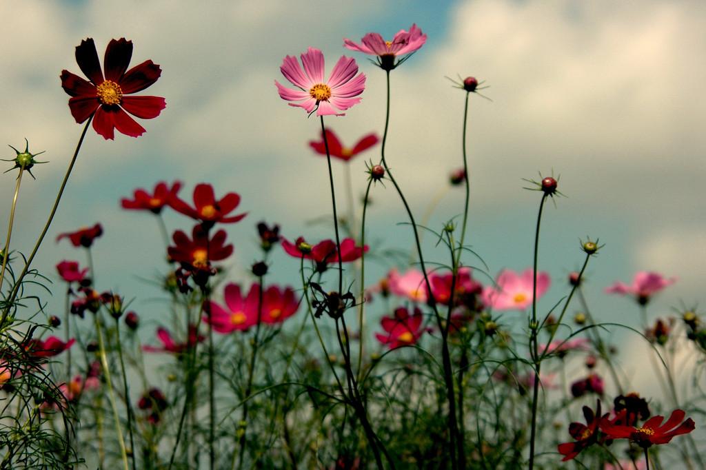 咲く・散る・咲け