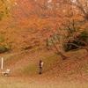 京都の公園どす