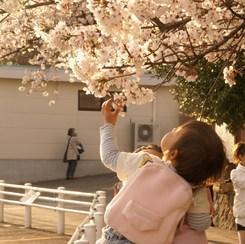 SONY DSLR-A100で撮影した人物(親子(春))の写真(画像)