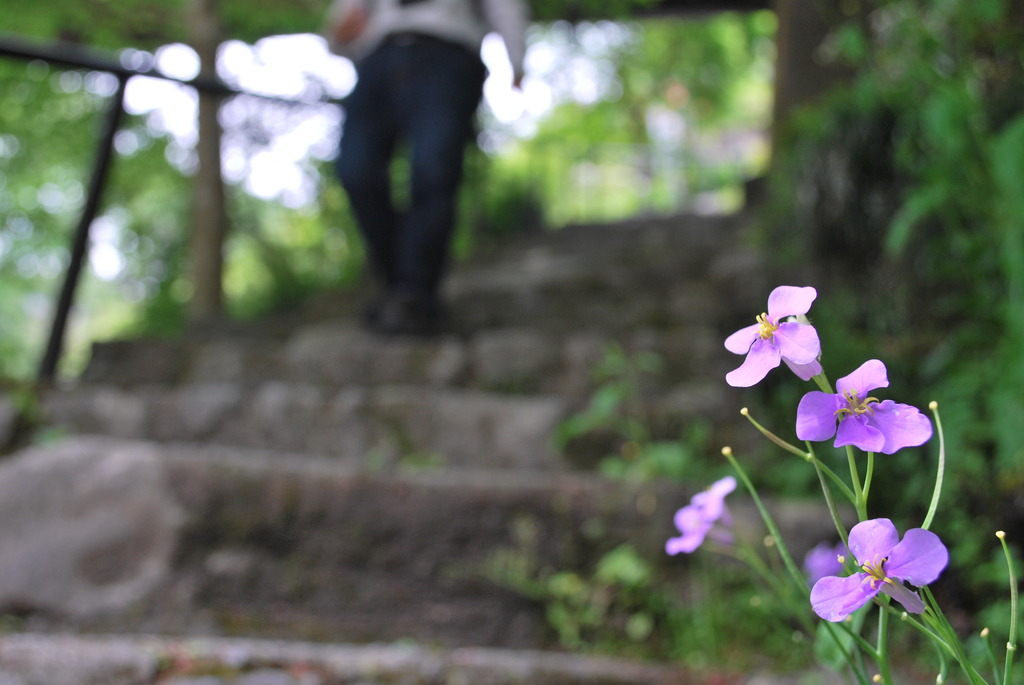階段脇の花