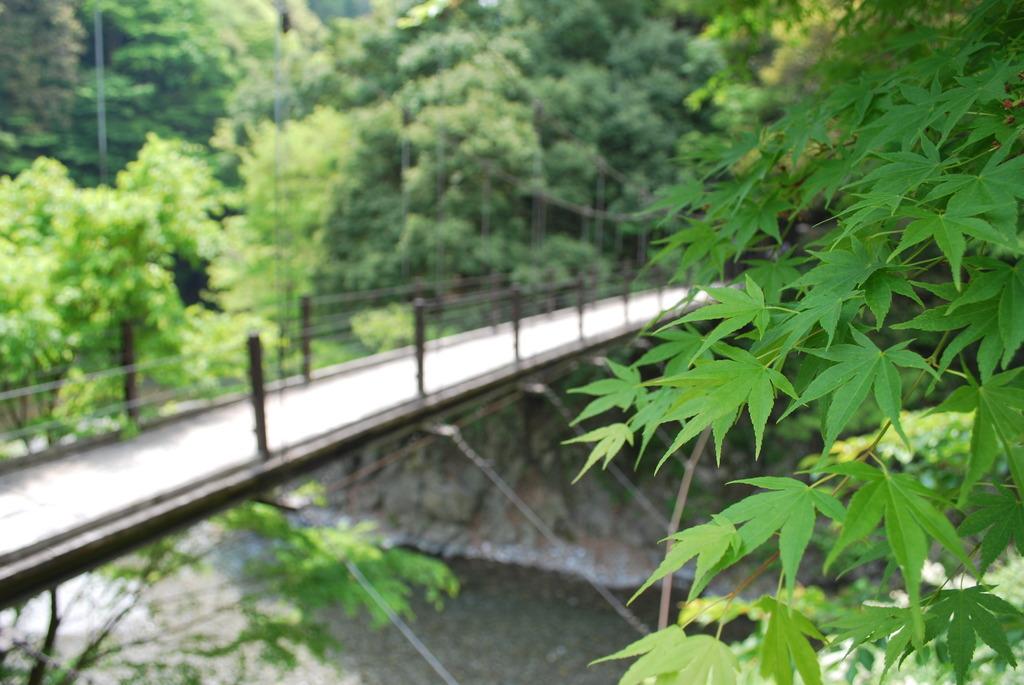 新緑を味わえる橋