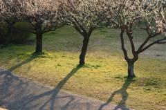 梅のある道