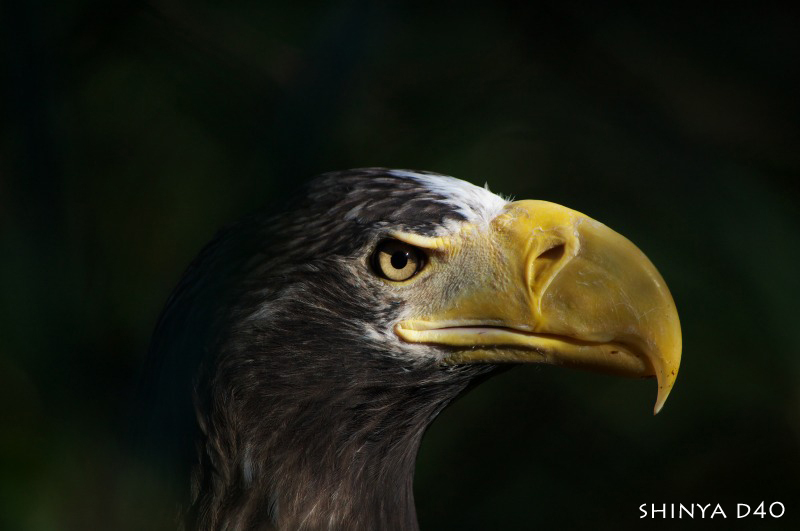 20090104多摩動物園152