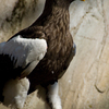 090214上野動物園005
