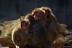 20090110多摩動物公園214