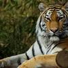 20090110多摩動物公園113