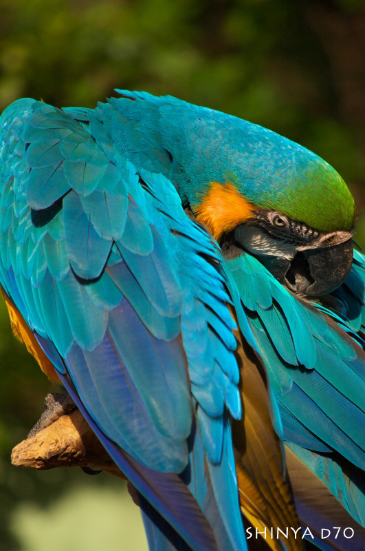 20081221D70多摩動物公園117