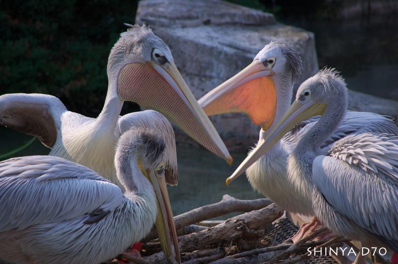 20081221D70多摩動物公園029