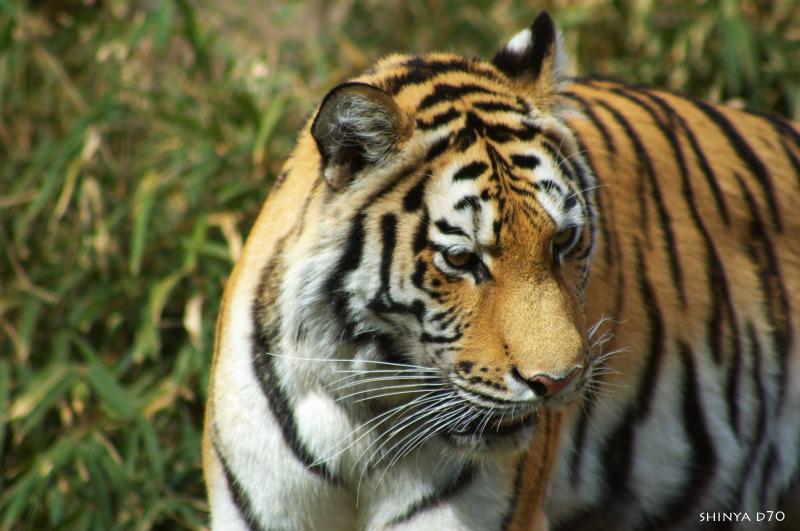 20090110多摩動物公園074