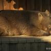 20081221D70多摩動物公園065
