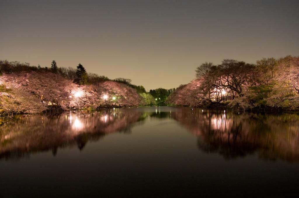 20090405夜桜D40_003