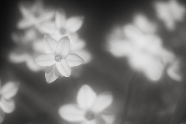 Shine of spring