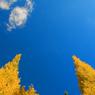 CANON Canon EOS Kiss Digital Xで撮影した風景(天高く…)の写真(画像)